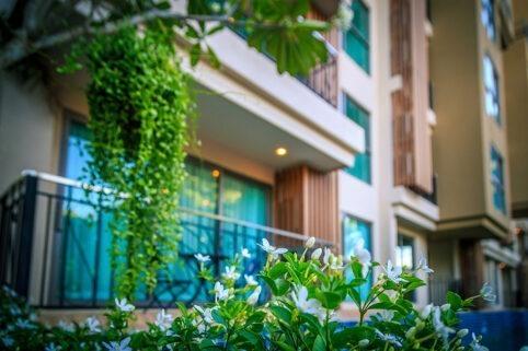 城市花园热带庭院